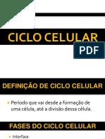 Conferência Ciclo Celular