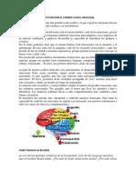 COMO FUNCIONA EL CEREBRO A NIVEL EMOCIONAL.docx
