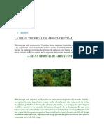 Selva Africa Central