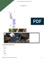 Los Polluelos Del Águila Dorada _ Generación Pentecostal