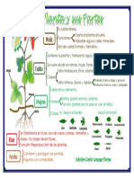 La planta y sus partes 1ero de primaria