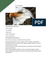 ÁGUIA.docx