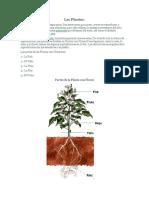 Las Plantas.docx