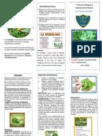 triptico - VERDOLAGA.pdf