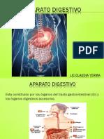 10 Sistema Digestivo