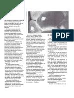 157253241-ELABORACION-DE-BRIOCHES-Y-DERIVADOS-pdf.pdf