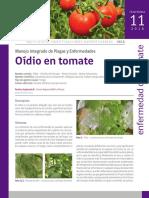Oídio en tomate