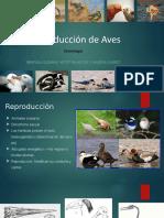 Reproducción de Aves.pptx