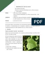 Informe plantones
