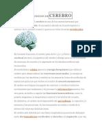 El cerebro y el aprendizaje