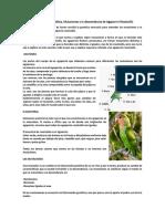 Explicación de Genética, Mutaciones y la descendencia de Agapornis Roseicollis.pdf