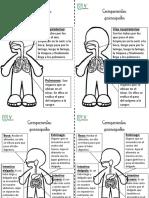 Fichas Respiratorio y Digestivo