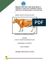 298871296-Musculos-del-bovino.pdf
