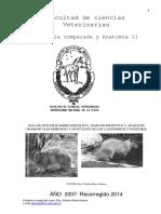 APO 13 Lagomorfos y Roedores Negra