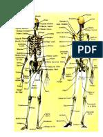 trabajo del esqueleto humano.docx
