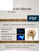 Aula Sistema Nervoso - 8 ano
