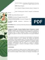 Coleopteros de Colombia 50 Especies Llamativas Ins
