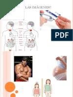 sistema endicrino