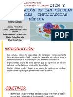 Renovación, Migración y Diferenciación de Las Células (2)