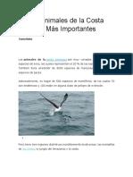 Los 20 Animales de la Costa Peruana Más Importantes Por Francia Robles Los animales de la costa peruana son muy variados. Perú tiene 1730 especies de aves, las cuales representan el 20 % de las especies del planeta. También tiene alrededor de 4200 especies de mariposas y más de 300 especies de peces.   Adicionalmente, es hogar de 500 especies de mamíferos, de los cuales 70 son endémicos y 100 están en alguna clase de peligro de extinción.   Perú tiene tres regiones distintivas increíblemente biodiversas