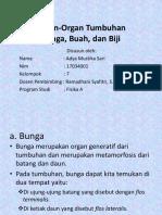 Adya Mustika Sari (Organ-Organ Tumbuhan)