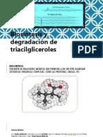 Biosíntesis y degradación de triacilgliceroles 2018.pptx