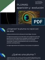 PLUMAS_ Aparición y Evolución