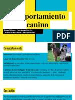 Comportamiento Caninos