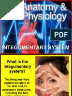 176-Anatomy-Integumentary-System.ppt