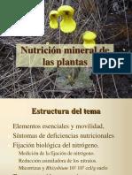 CLASE2 Nutrición mineral1