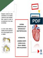folleto desarrollo venoso 1