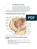 Male and Female Reproductive Organs.docx