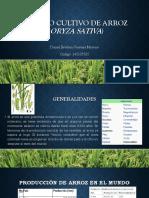 Manejo Cultivo de Arroz (Oryza sativa).pptx