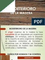 Bio-Deteriodo de La Madera