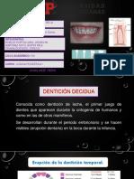 anatomia y histologia denticion temporal.pptx