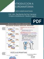 CLASE 1 PSICOLOGIA PDF neuroantomia.pdf