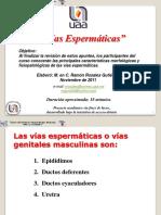 viasespermaticas-111130145058-phpapp01.pptx