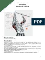 muscul2.pdf