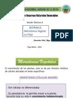 TEORIA 3_BOTANICA.pptx