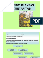 Reino Plantas - Metafitas 2345
