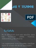Celulas y Tejidos