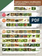 Liste illustrée des 70 EEE classées prioritaires en Nouvelle-Calédonie