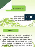 8._Tejidos_meristematicos_fundamentales_de_conduccion_y_dermicos_2016 (1)