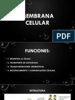 1.09 Membrana Celular.ppsx