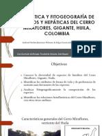 FLORÍSTICA Y FITOGEOGRAFÍA DE MUSGOS Y HEPÁTICAS DEL CERRO MIRAFLORES, GIGANTE, HUILA, COLOMBIA