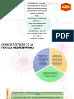-Investigacion 15 Herpesvirus Diapositiva