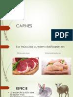CARNES-EXPOSICION.pptx
