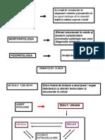 Procese Patologice 2.ppt