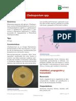 Cladosporium spp.pdf