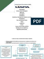 anatomia tarea 7.docx